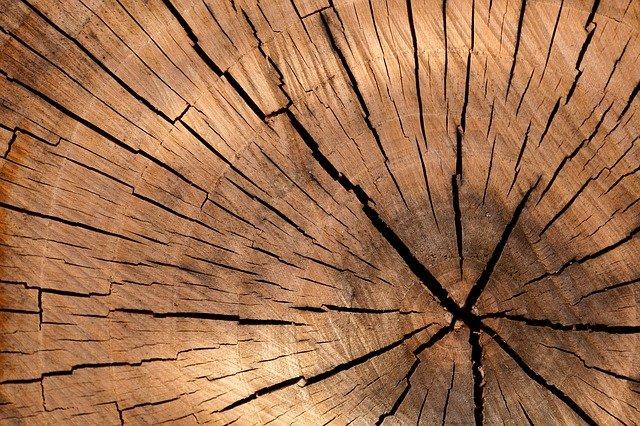 I tarli del legno: una piaga da non sottovalutare